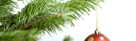 Order your Real Christmas Trees on BBX now!