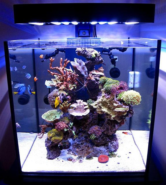 Aquatic services for marine tropical and cold water for Cube saltwater fish tank