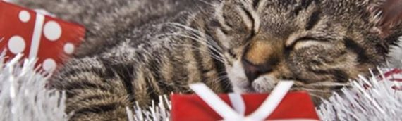 Pause Cat Cafe – Gift Voucher for two