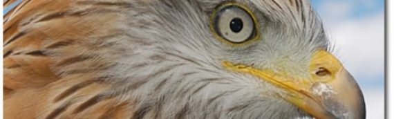 Enjoy a Great Family day out this Summer at Liberty's Owl, Raptor and Reptile Centre in Ringwood
