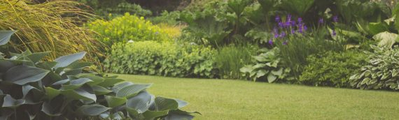 Deltic Solutions – Ground & Garden Maintenance – deep-cleaning – pest-prevention – From Winchester to Salisbury and up to Basingstoke